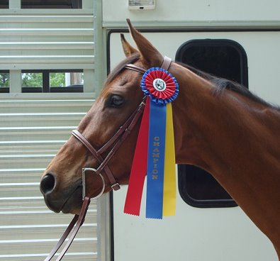 Phil's Courage brought home a Championship Ribbon from the halter division.